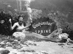 A mermaid underwater at Weeki Wachee Springs , Florida Memory Old Florida, Florida Girl, Vintage Florida, Florida Style, Florida Living, Tampa Florida, Florida Vacation, Central Florida, Mermaids In Florida