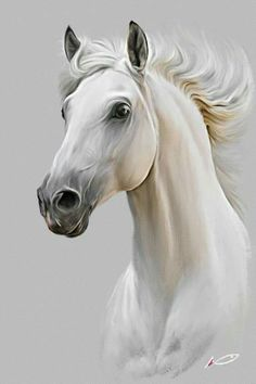 caballo.........besitos