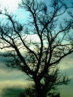 The Creative Photographer: The Secret Life of Trees Catherine Anderson