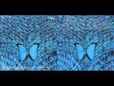 Carlos Santana - Life is Anew - YouTube