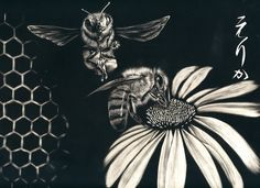 Scratchboard Animals and Floral - MORE ART, LESS CRAFT - Sorry for the multiple new topics, I've finally got a day at home with a few hours to kill so I'm taking advantage. Kratz Kunst, Scratchboard Art, Scratch Art, Black Paper, Art Boards, Art Lessons, Creative Art, Flower Art, Printmaking