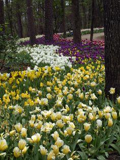 Garvan woodland gardens hot springs arkansas go during the tulip tulips garvan gardens hot springs arkansas mightylinksfo