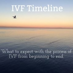 IVF Timeline - What to expect when preparing for IVF w/PGD beginning to end.