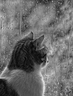 Watching the rain... by Rosiefay