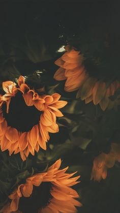 phone wallpaper sunflower Sunflower Wallpaper Iphone Backgrounds Phone Wallpapers Ideas For 2019 Lock Screen Wallpaper Iphone, Iphone Background Wallpaper, Tumblr Wallpaper, Nature Wallpaper, Wallpaper Samsung, Wallpaper Quotes, Wallpaper Iphone Vintage, Beauty Iphone Wallpaper, Iphone 7 Plus Wallpaper