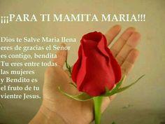 Esta rosa a Mamita Maria Santísima.