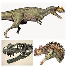 ceratosaurus was a powerful predator that was a carnivore that had a short horn on its snout. it had a massive tail, a bulky body, and heavy bones. its arms were short and it had four-fingered hands with small claws. it also had large eyes indicating it had good eyesight.