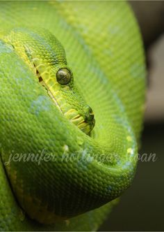 By jhs snake Toronto Zoo, Animals, Animais, Animales, Animaux, Animal, Dieren