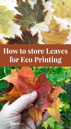 How to Store Leaves for Eco Printing - Made By Barb - tips to save, collect Shibori, Fabric Painting, Fabric Art, Natural Dye Fabric, Natural Dyeing, Fabric Dyeing Techniques, How To Dye Fabric, Dyeing Fabric, Leaf Art