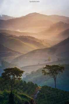 higordepadua posted a photo:  The sunset on the mountains of Minas Gerais and the coffee plantations.  Coffee production in Brazil is responsible for a third of all coffee, making Brazil by far the world's largest producer, a position the country has held for the last 150 years. Coffee plantations, covering some 27,000 km2 (10,000 sq mi), are mainly located in the southeastern states of Minas Gerais, São Paulo and Paraná where the environment and climate provide ideal growing conditions…