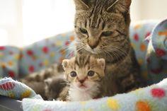 maternal love #cats