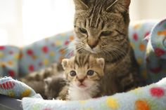 maternal love #cats