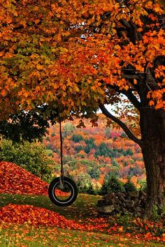 Autumn tree, heaps of orange leaves, and a tire swing. Autumn tree, heaps of orange leaves, and a tire swing. Autumn Day, Autumn Leaves, Fall Trees, Red Leaves, Hello Autumn, Autumn Scenes, All Nature, Fall Pictures, Autumn Photos
