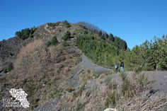 Vegetation on Monte Somma. Escrusione sulla dorsale del Monte Somma (ph Umberto Saetta)