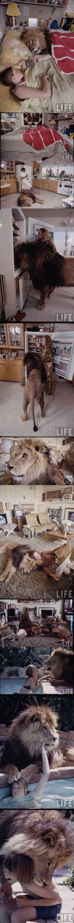 Tippi Hedren (mother of Melanie Griffith) shared her home with a full grown lion named Neil in the 1980s.