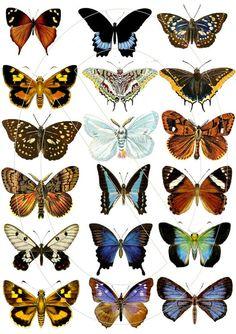 Collage digital hoja con mariposa vintage imágenes, imágenes digitales, utiliza como muchas veces que desee para la obra de arte, tarjetas de