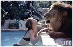 Dangerous Pet - Amazing Pet Lion