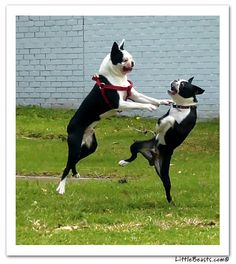 kung fu fightin'.........makes me think of anna and molly @Mary Bennett