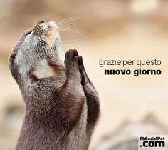nuovogiorno Finalmente venerdì amici pets! Buon week end! #buongiornofbsocialpet #buongiornopets