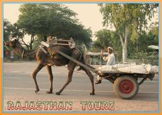 Rajasthan Tour- Luxury Moments with Golden Sand