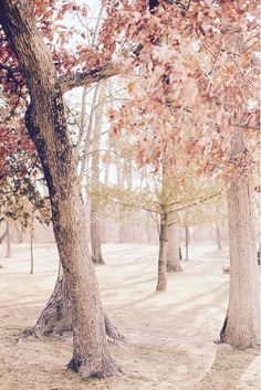 """~ Autumn ~ """"Beyond the pearled horizons lie Winter and night."""" ~Ernest Dowson, The Poems and Prose of Ernest Dowson Soft Autumn, Autumn Home, Autumn Girl, Autumn Leaves, Shades Of Peach, Pastel, Nature, Scenery, Fine Art"""