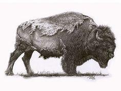 sketching buffalo   Yellowstone Bison - Yellowstone Buffalo Bull (sold) by Chris Woolley