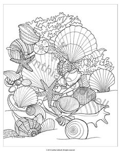 seashells coloring page instant download by yetanothermomshop - Seashell Coloring Pages Printable
