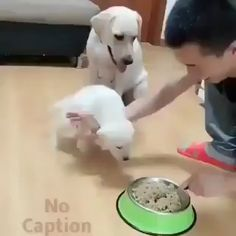 Funny Cat And Dog Memes Hilarious Funny Animal Videos, Cute Funny Animals, Animal Memes, Cute Baby Animals, Funny Cute, Funny Dogs, Animals And Pets, Cute Cats, Dog Memes