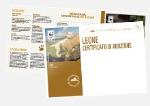 Adotta un Leone - Sostieni WWF