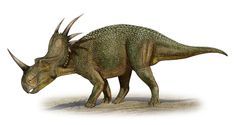 Art illustration - Dinosaurs - Styracosaurus: (reptile spiked) is a genus of dinosaur ornitisquios ceratópsidos who lived in the late Cretaceous period, 75 million years ago in the Campanian, in what is now Norteamérica.Tenía four to six horns coming out of his nuchal gola, horn on his nose, he is measuring 60 centimeters long and 15 wide. It was a relatively large dinosuario, reaching up to 6 meters long and weighing about 3 tons.