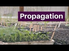 Propagation: germinate, grow and plant seedlings for a long season of bigger harvests - YouTube