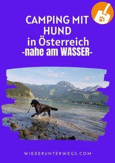 Hunde willkommen beim Campingurlaub Europe Travel Guide, Us Travel, Travel Destinations, Strand Camping, Travel Companies, Traveling By Yourself, Around The Worlds, Nature, Rv Camping