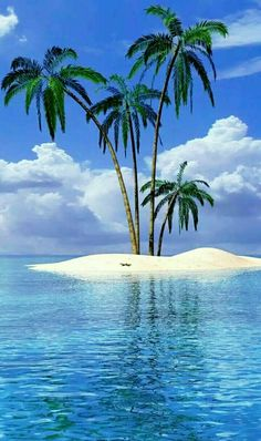 Beach Landscape With Palm Tree wallpaper. Ocean Beach, The Beach, Beach Scenes, Tropical Paradise, Paradise Travel, Tiny Paradise, Belle Photo, Beautiful World, Beautiful Images