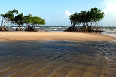 Marajo is a largest fluvial island of the world in the Amazon River, #Brazil that spreads over an area of 40100 square kilometers. This Island has 20 large rivers and has a population of 250000 inhabitants. It is an alluring destination for travelers.