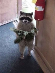 This little guy who is just trying to give his friend a helping hand. | 24 Times Raccoons Were Good Citizens Of The World