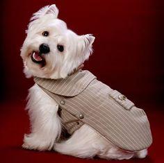Roupas-de-Inverno-para-Cachorros dog pet elegante moda canina 2014