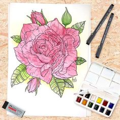 For this Rose I finally tried my @winsorandnewton watercolors I still have a lot to learn  . Its for the #floralsyourway challenge (hosted by @floralsyourway @alieletters @georgioudraws @lovelettersbylauren @heysailor_ and @sketchyminx) . Made with @staedtler_benelux fineliners and @winsorandnewton watercolors . #watercolor #baspetter . #art #drawing #painting #illustration #sketch #artwork #artist #ink #watercolour #paint #color #draw #pencil #creative #instaart #graphic #drawings…