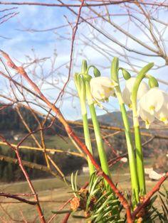 spring flowers Spring Flowers, Aquarium, Plants, Plant, Aquarius, Fish Tank, Planting, Planets, Spring Colors