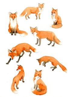 Original page of watercolor studies of foxes