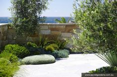 Plantings to soften walls and fences
