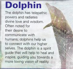 Dolphin spirit guide More