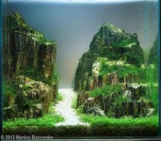 2013 AGA Aquascaping Contest - Entry #202