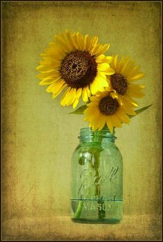 Mason jar and sunflower Happy Flowers, Beautiful Flowers, Sun Flowers, Vase Transparent, Sunflowers And Daisies, Mellow Yellow, My Sunshine, Still Life, Floral Arrangements