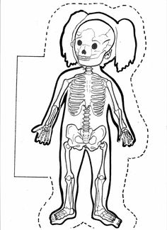 Large Human Body Contours for Display - SparkleBo Kindergarten, Montessori Classroom, My Themes, Education Quotes For Teachers, Body Systems, Body Contouring, Educational Technology, Science And Nature, Pre School