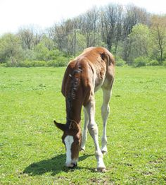 Feeding the Foal for a Successful Weaning