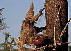 A Cameroonian honey hunter works a hive of bees 45 feet above the forest floor protected only by a straw suit.