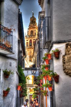 Tower of the Mosque and alley flowers, Cordoba, Spain