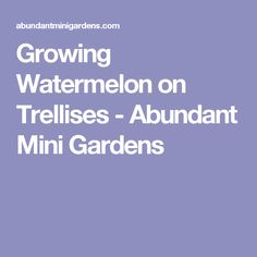 Growing Watermelon on Trellises - Abundant Mini Gardens