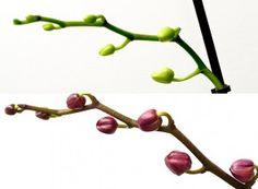 Bobocii din imaginea superioară sunt mai slab dezvoltaţi, deoarece planta a fost ţinută într-o cameră întunecoasă, departe de fereastră. Mai, Hair Accessories, Garden, Beauty, Plant, Garten, Lawn And Garden, Hair Accessory, Gardens