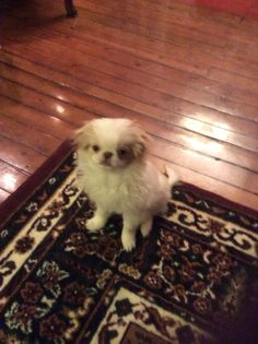 Aiko Aiko, Puppies, Dogs, Animals, Animales, Puppys, Animaux, Pet Dogs, Doggies